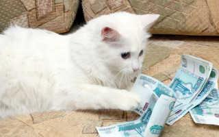 Сколько стоит содержание кота или кошки