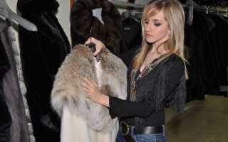 Как добывают мех соболя в Сибири и будущее натурального меха
